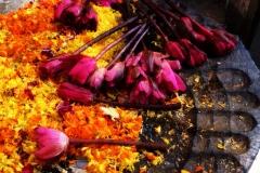 Geliu aukojimai Indija, Bodgaja N.G.Wolmer foto