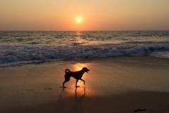 indija Goa suo saulelydis N.G.Wolmer foto