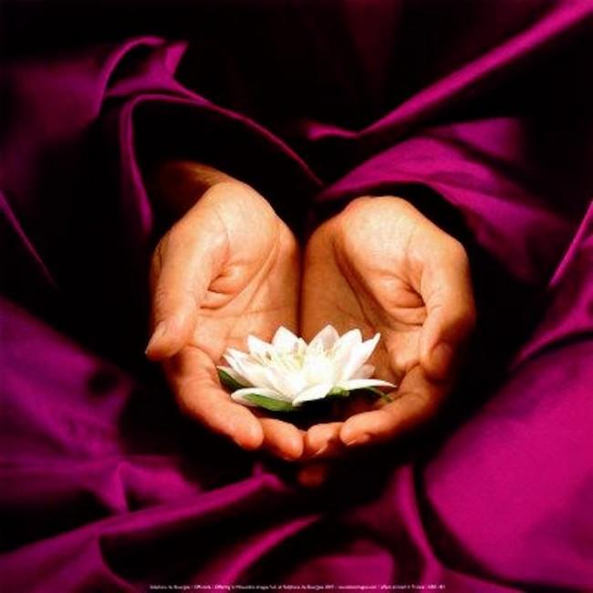 lotosas rankose