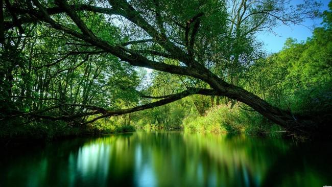 ezeras, gamta