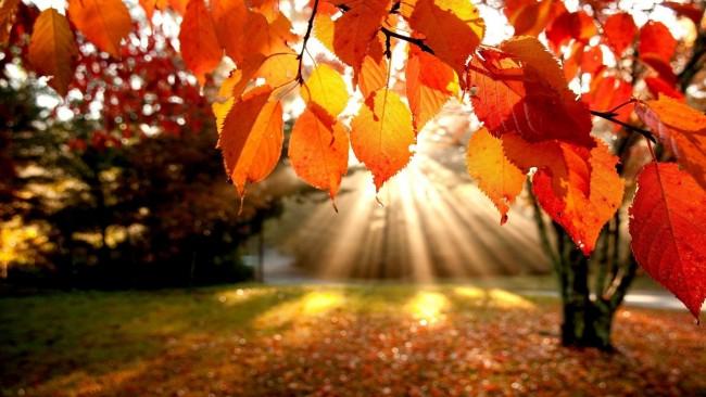 ruduo-spalio-jaunatis